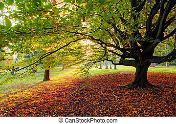 automne, arbre, parc