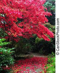 automne, arbre, parc, rouges