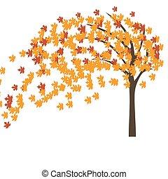 automne, arbre, vent, érable