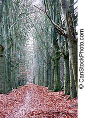 automne, arbres nus