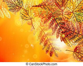 automne, arrière-plan., feuillage