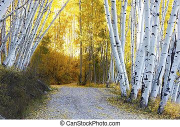 automne, aspen colorado, forêt