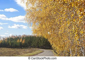 automne, asphaltez route