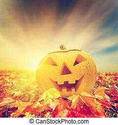 automne, automne, feuilles, halloween, citrouille