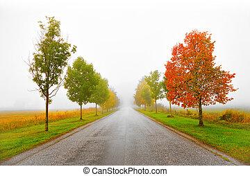 automne, avenue