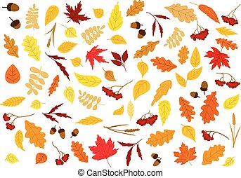 automne, baies, glands, herbes, feuilles