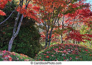 automne, baldaquin, rouges, sous