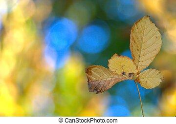 automne, barbouillage
