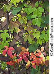 automne, barrière, 02