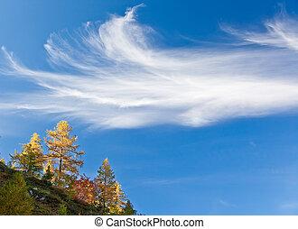 automne, bleu, sur, ciel, arbres