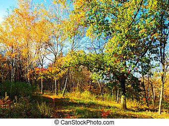 automne, bois, dehors