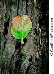 automne, bois, feuilles, vieux, sur