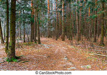 automne, bois, glacial, route, jour