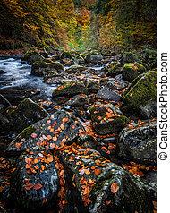 automne, braan, rivière, perthshire