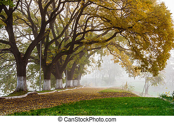 automne, brouillard, arbres