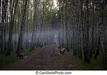 automne, brouillard, parc, gens