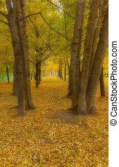automne, brume, brouillard, avenue