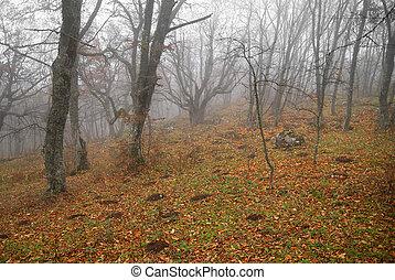 automne, brumeux, baissé, leaves., forêt