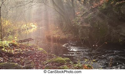 automne, brumeux, chute eau, forêt