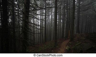 automne, brumeux, forêt