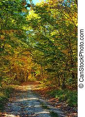 automne, brumeux, parc, chemin