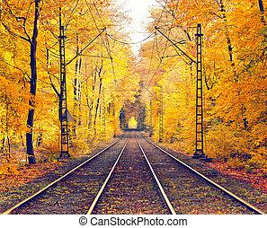 automne, brumeux, parc