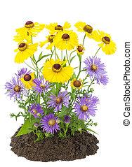automne, buisson, fleurs, jaune, violet