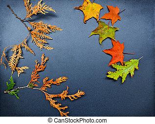 automne, cèdre, érable, chêne, cadre