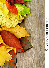 automne, cadre, pousse feuilles
