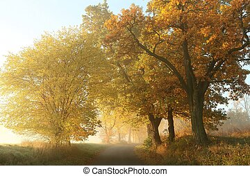 automne, campagne, matin