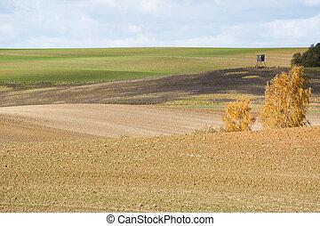 automne, champs