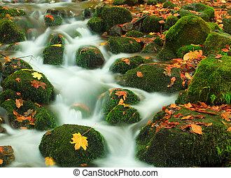 automne, chute eau