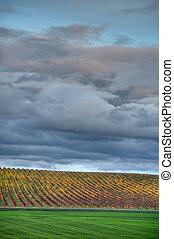 automne, ciel, jaune, vignoble, nuageux, dessous