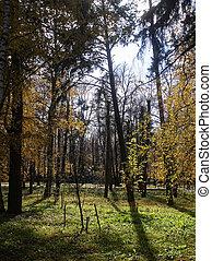 automne, clair, parc, jour, arbres