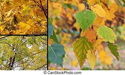 automne, collage