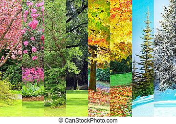 automne, collage, printemps, été, hiver