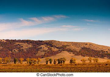 automne, colline, arbres