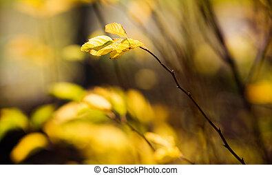 automne, coloré