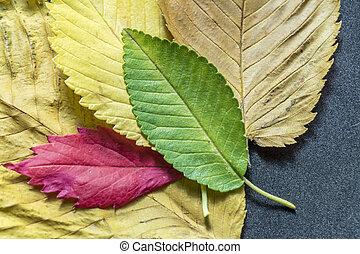 automne, coloré, feuilles, texture, fond