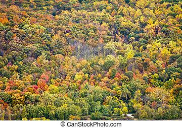 automne, coloré, fond, texture, forêt