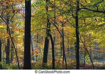 automne, coloré, forêt