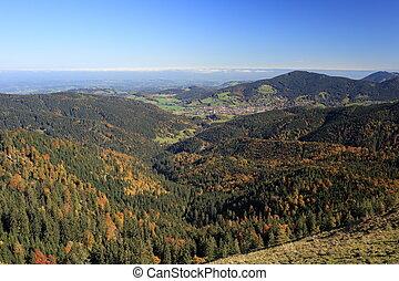 automne, coloré, paysage, forêt