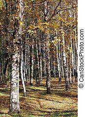 automne, coloré, temps, parc, solaire