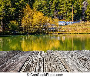 automne, colorado, tremble, arbres, usa