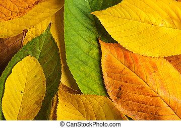 automne, composition., feuille