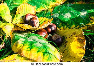 automne, concept, vert, jaune, coloré