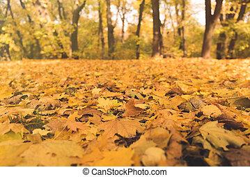 automne, congés tombés, parc