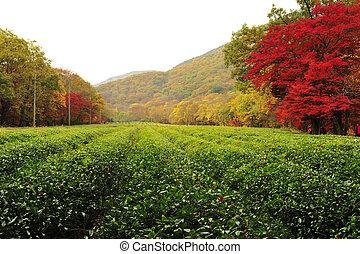 automne, corée sud, temples, paysage