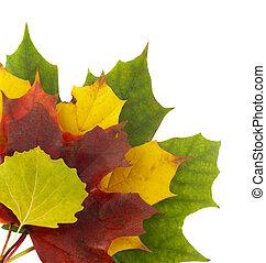 automne, couleurs, 2