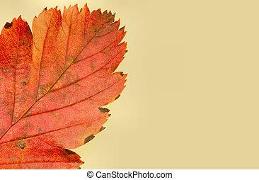 automne, couleurs, #5